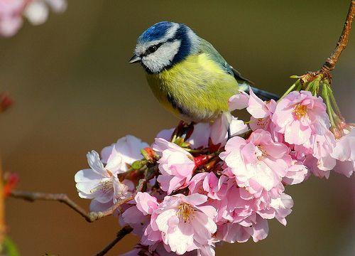 le chant de l'univers – les oiseaux