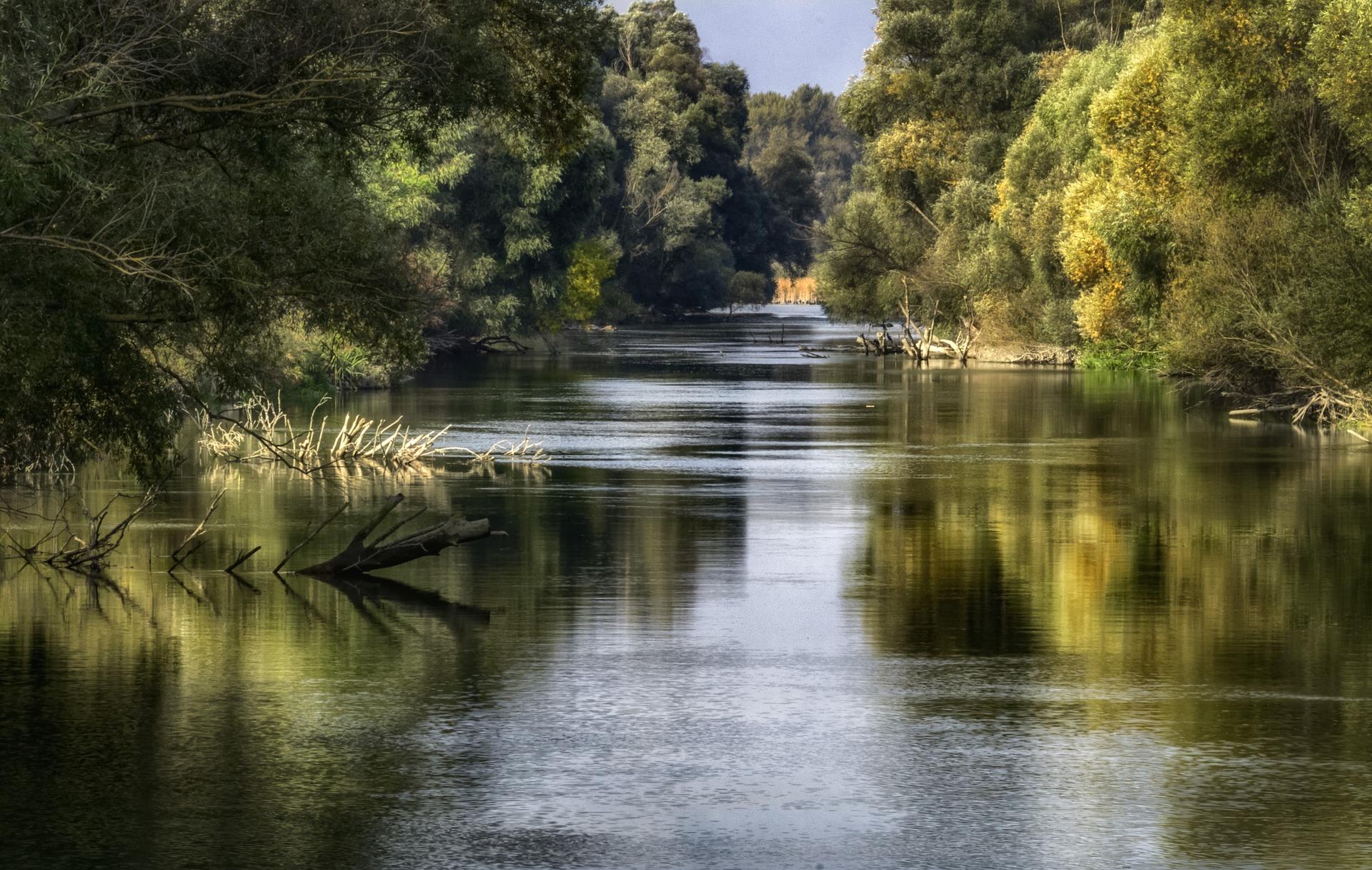 le chant de l'univers - rivière et tronc d'arbre