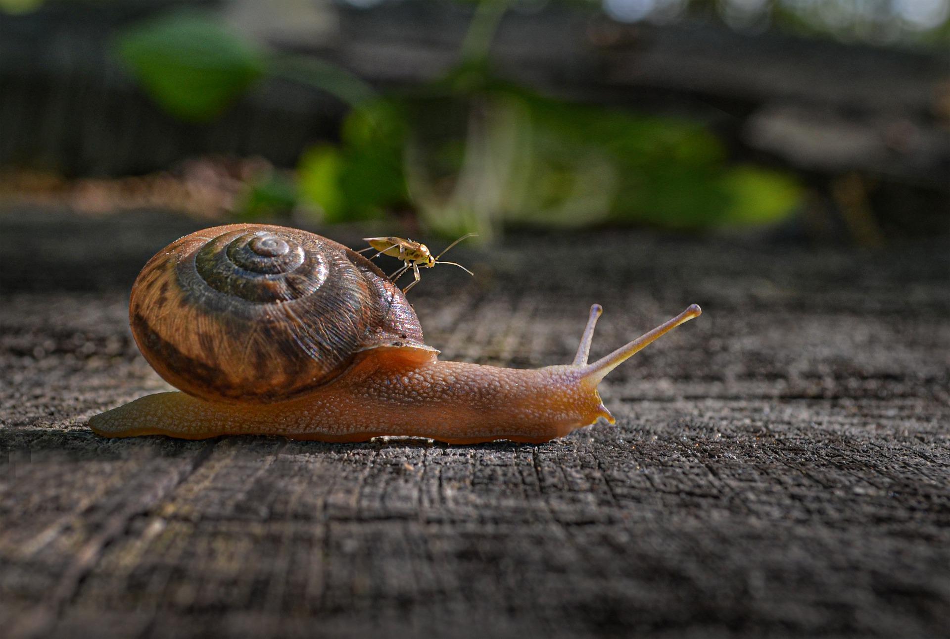 L'escargot et l'insecte- chant de l'univers
